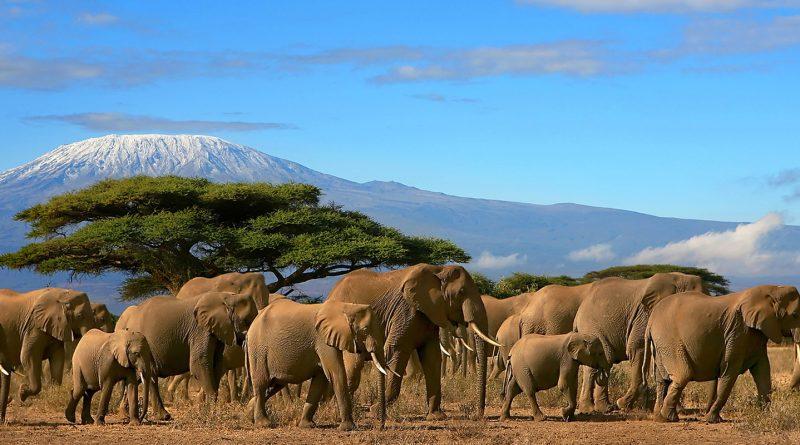 treking-odprava-na-kilimanjaro