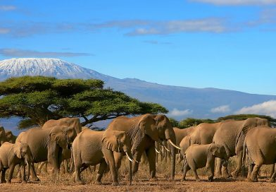 Treking Kilimanjaro 5895 m