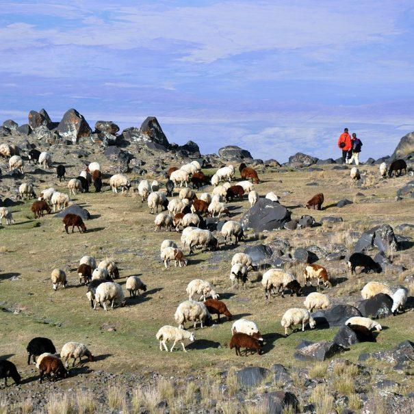 Ararat treking potovanje (4)