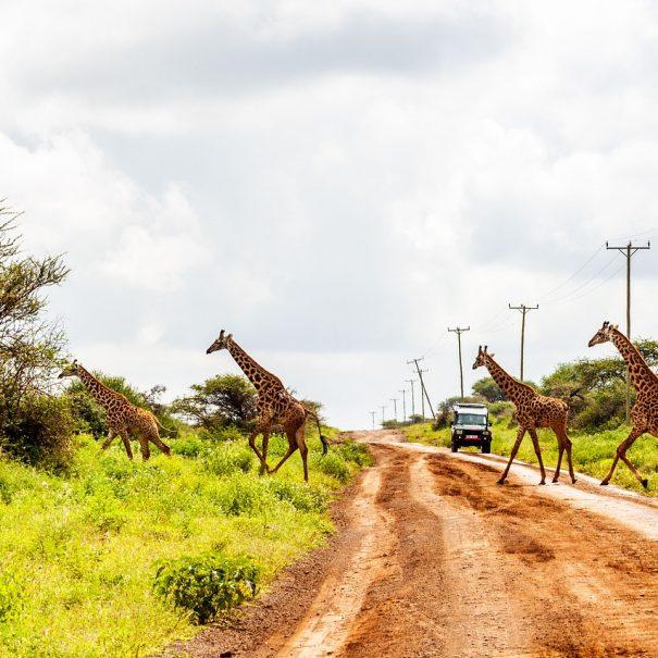 Kilimanjaro treking potovanje (3)