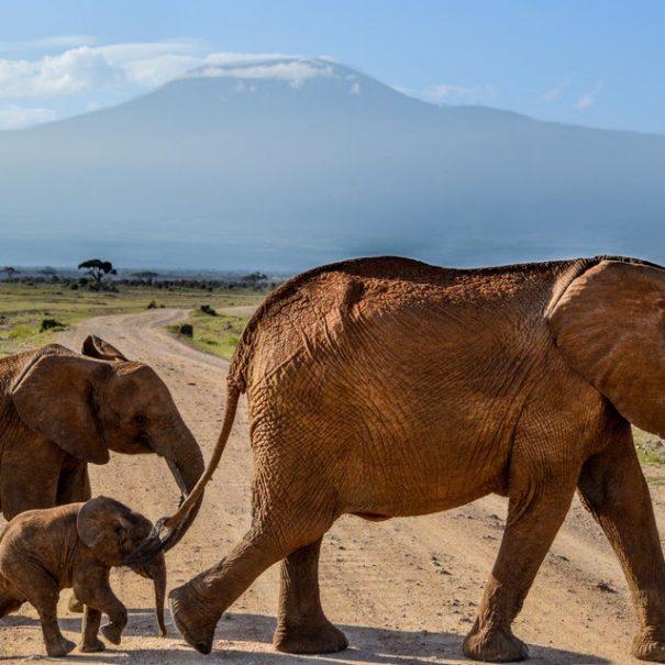 Kilimanjaro treking potovanje (5)