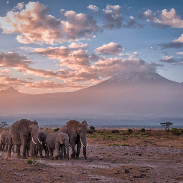 Kilimanjaro treking potovanje (6)
