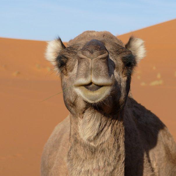 Maroko treking potovanje (12)