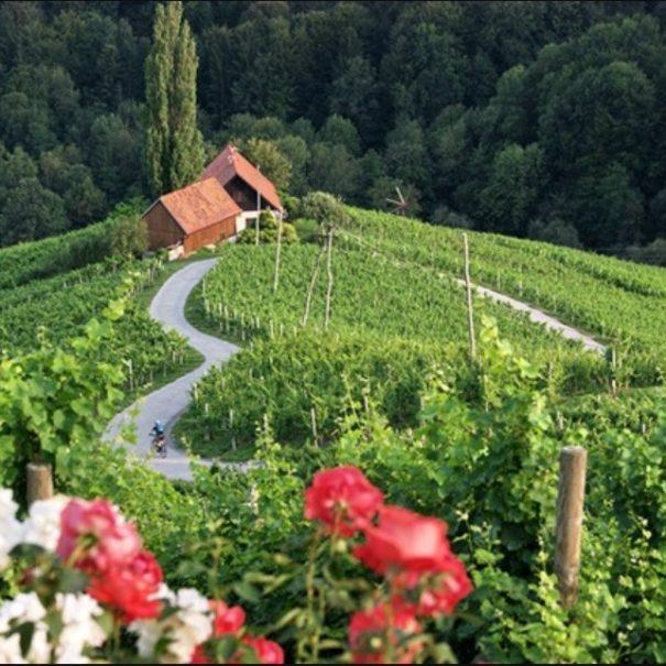 srce med vinogradi