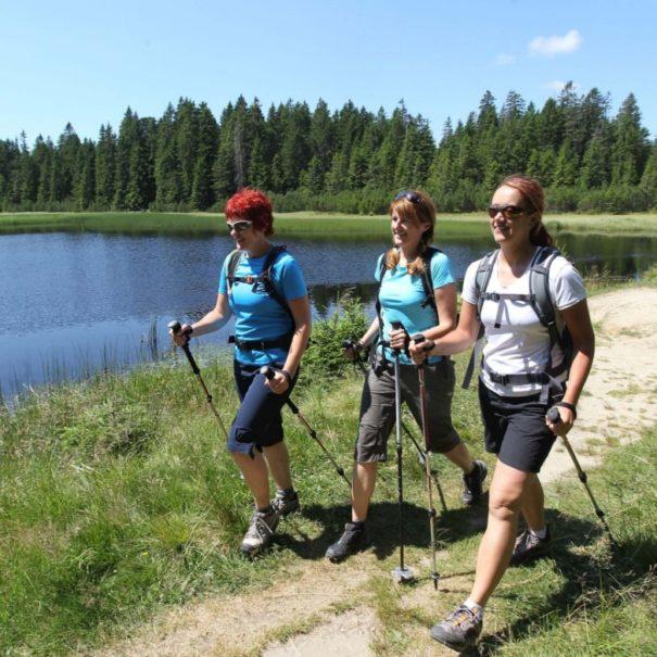 Pot Čez pohorje planinski izlet