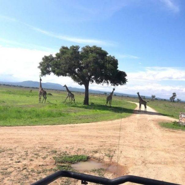 potovanje zanzibar tanzanija safari
