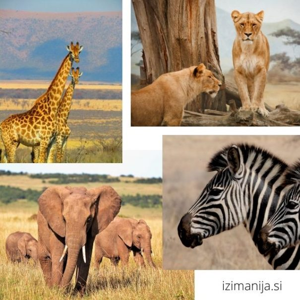 potovanje safari zanzibar tanzanija
